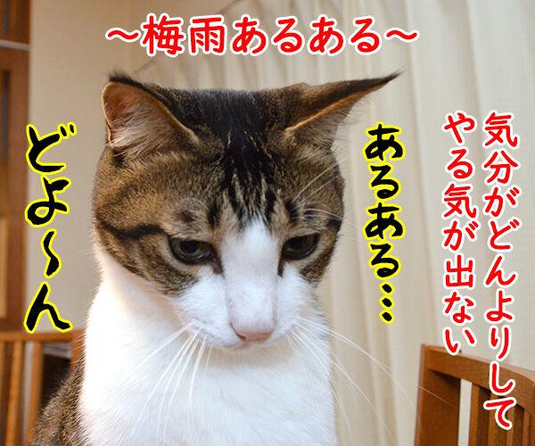 梅雨あるある 猫の写真で4コマ漫画 1コマ目ッ