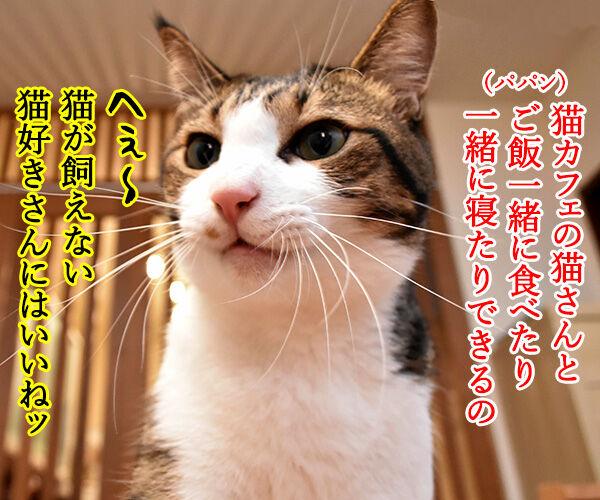 猫カフェの猫さんと泊まれる旅館があるんですってッ 猫の写真で4コマ漫画 2コマ目ッ