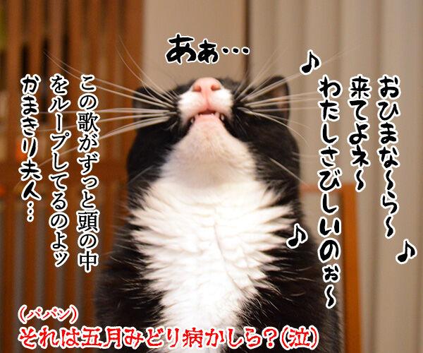 五月だから 猫の写真で4コマ漫画 4コマ目ッ