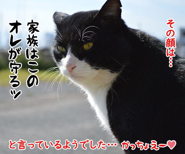 猫島 其の一 猫の写真で4コマ漫画 4コマ目ッ