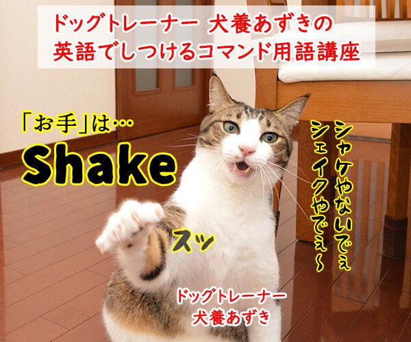 ドッグトレーナー 犬養あずきの英語でしつけるコマンド用語講座 猫の写真で4コマ漫画 1コマ目ッ