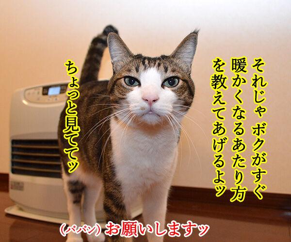 すぐあったかくなるヒーターのあたり方 猫の写真で4コマ漫画 3コマ目ッ