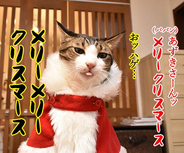 クリスマスにとってもとっても見たかったもの 猫の写真で4コマ漫画 1コマ目ッ