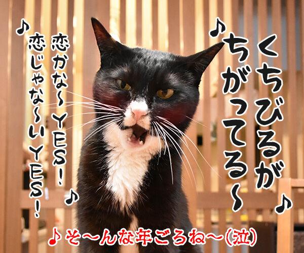 去年とは違ってるもの 猫の写真で4コマ漫画 4コマ目ッ