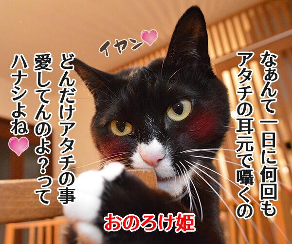もののけ姫とアシタカとサン 猫の写真で4コマ漫画 4コマ目ッ
