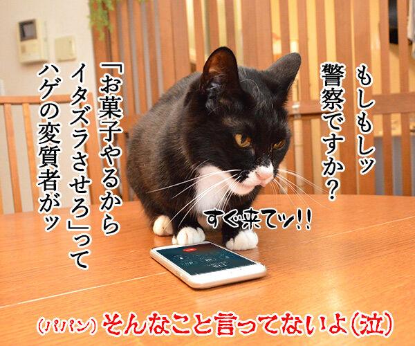 お菓子くれなきゃイタズラしちゃうぞ♥ 猫の写真で4コマ漫画 4コマ目ッ