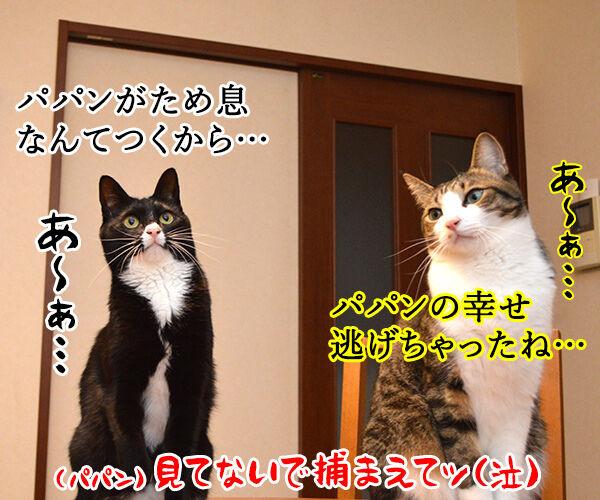ただいまぁ 其の四 猫の写真で4コマ漫画 4コマ目ッ