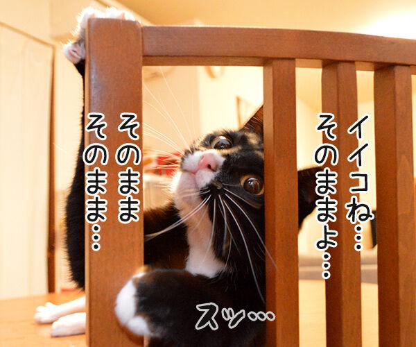ちょっと来てッ 猫の写真で4コマ漫画 2コマ目ッ