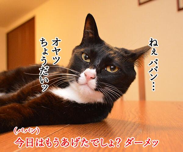 オヤツちょーだいッ 猫の写真で4コマ漫画 1コマ目ッ