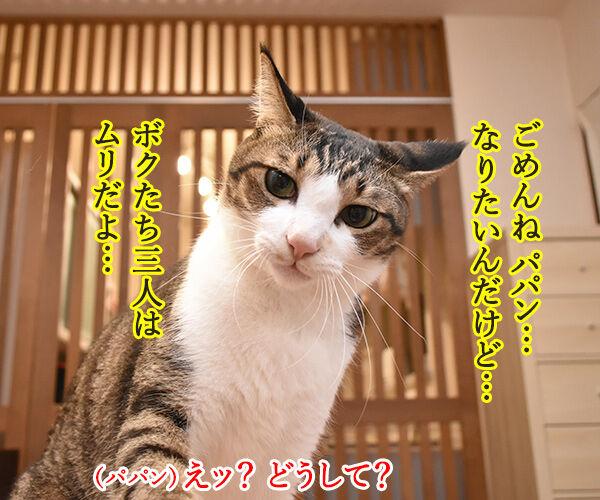 あずだいパパンも「ワンチーム」になりたいのッ 猫の写真で4コマ漫画 3コマ目ッ