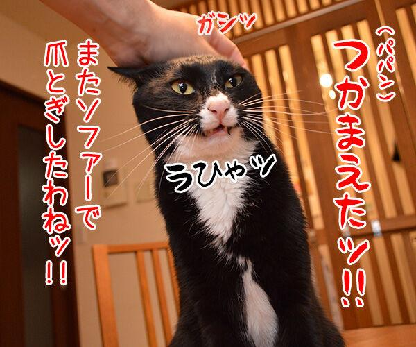 うっかりさん 猫の写真で4コマ漫画 1コマ目ッ