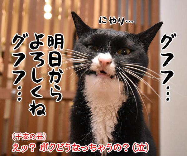 来年の干支の丑さんがご挨拶なのッ 猫の写真で4コマ漫画 5コマ目ッ