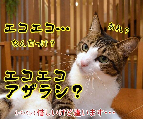 ボクもあの呪文を唱えちゃうよ? 猫の写真で4コマ漫画 2コマ目ッ