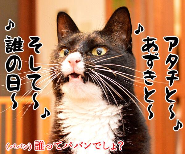 昨日は春の陽気でした 猫の写真で4コマ漫画 3コマ目ッ