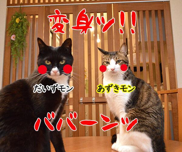 あずきッ いくわよッ 猫の写真で4コマ漫画 3コマ目ッ