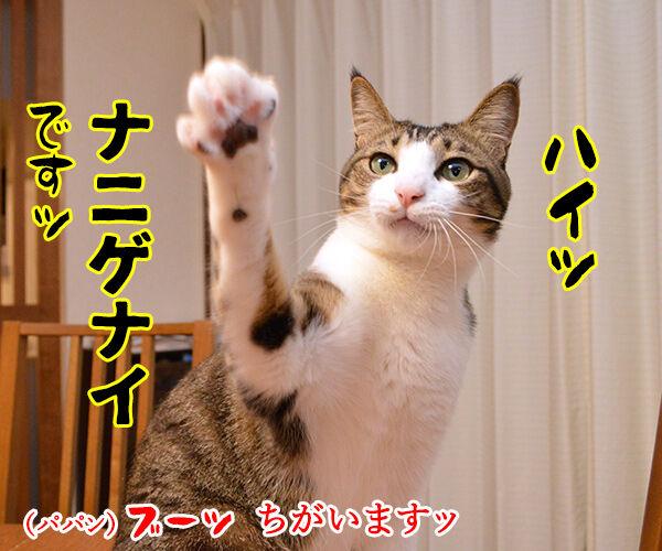 ドラゲナイ 猫の写真で4コマ漫画 2コマ目ッ