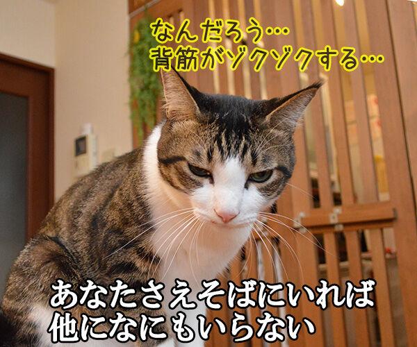 あなただけ見つめてる(大黒摩季) 猫の写真で4コマ漫画 3コマ目ッ