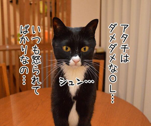 OLだいず 猫の写真で4コマ漫画 1コマ目ッ