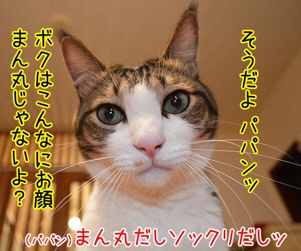 あずきさんとだいずさんの似顔絵を描いてもらったのッ 猫の写真で4コマ漫画 2コマ目ッ