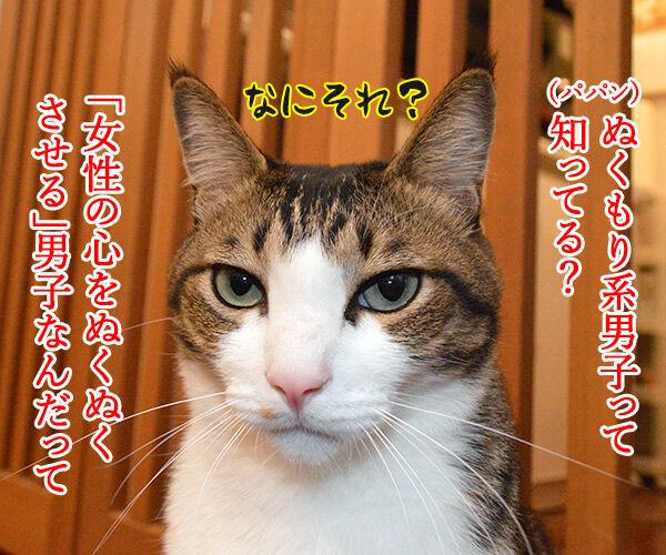 ぬくもり系男子って知ってる? 猫の写真で4コマ漫画 1コマ目ッ