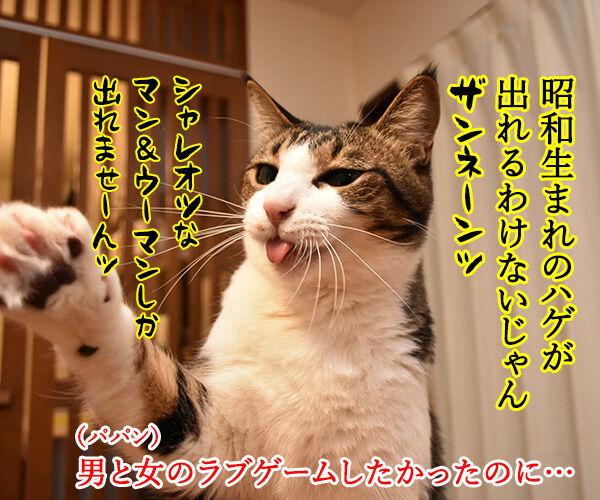 TERRACE HOUSE に出てみたいのよッ 猫の写真で4コマ漫画 2コマ目ッ