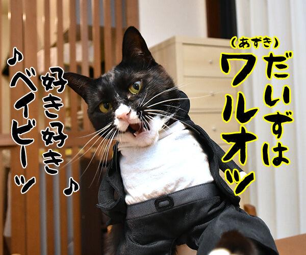イモ欽トリオごっこするよーッ 猫の写真で4コマ漫画 3コマ目ッ