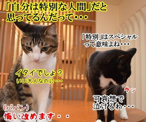 恥ずかしい勘違い 其の二 猫の写真で4コマ漫画 4コマ目ッ