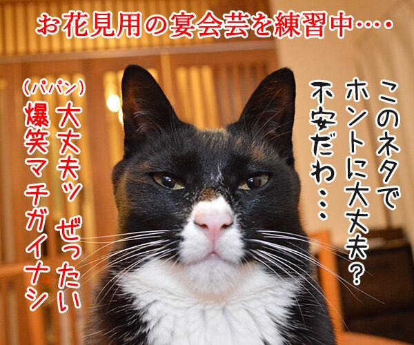 宴会芸 猫の写真で4コマ漫画 1コマ目ッ