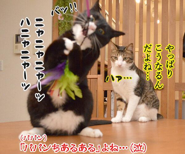 ねこじゃらしで遊びませんこと~? 猫の写真で4コマ漫画 4コマ目ッ