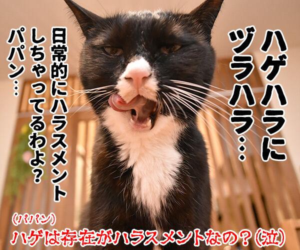 ハラミ会って美味しいのー? 猫の写真で4コマ漫画 4コマ目ッ