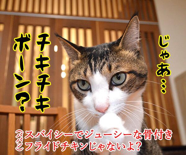 『ボーン』シリーズ最新作『ジェイソン・ボーン』が公開されたのよッ 猫の写真で4コマ漫画 3コマ目ッ