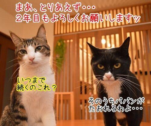 二年目のほうふ 猫の写真で4コマ漫画 4コマ目ッ