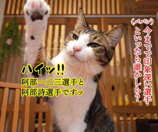東京オリンピック ガンバレ!!ニッポン!! 猫の写真で4コマ漫画 2コマ目ッ
