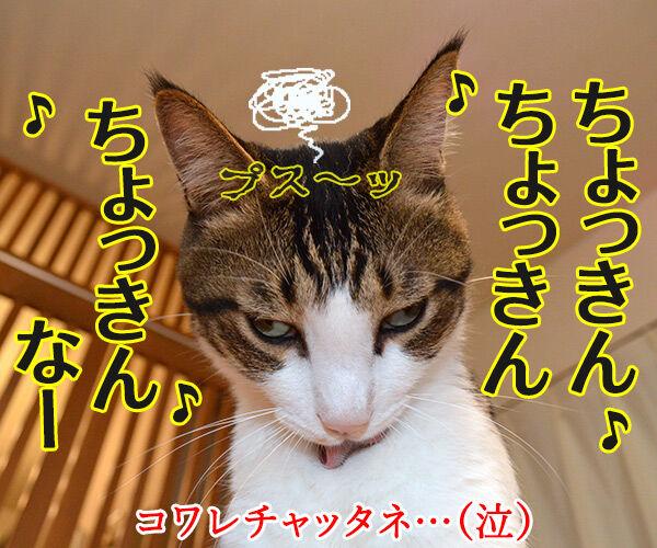 経理課あずきは大忙しッ 猫の写真で4コマ漫画 4コマ目ッ