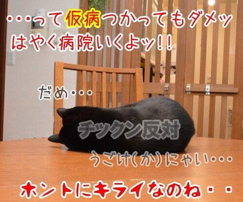 予防接種の日 猫の写真で4コマ漫画 4コマ目ッ
