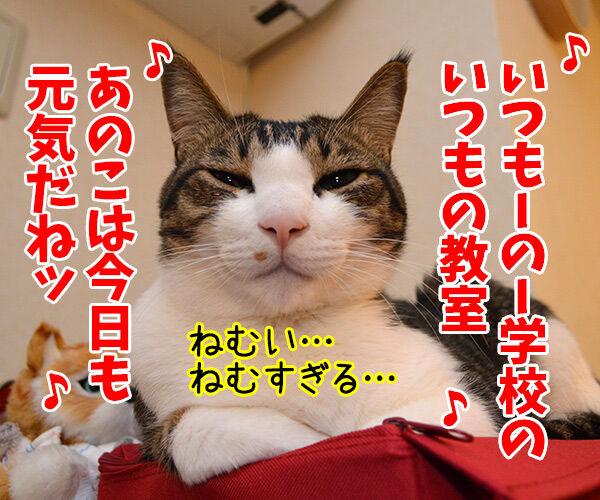 すいみん不足 猫の写真で4コマ漫画 2コマ目ッ