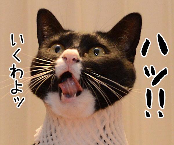 集中ッ 猫の写真で4コマ漫画 2コマ目ッ