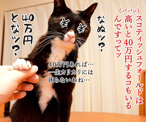 猫の種類 人気ランキング 猫の写真で4コマ漫画 3コマ目ッ