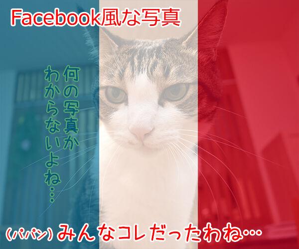SNSの投稿 〇〇風な写真 猫の写真で4コマ漫画 3コマ目ッ