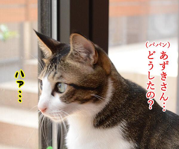 おそとには 猫の写真で4コマ漫画 2コマ目ッ