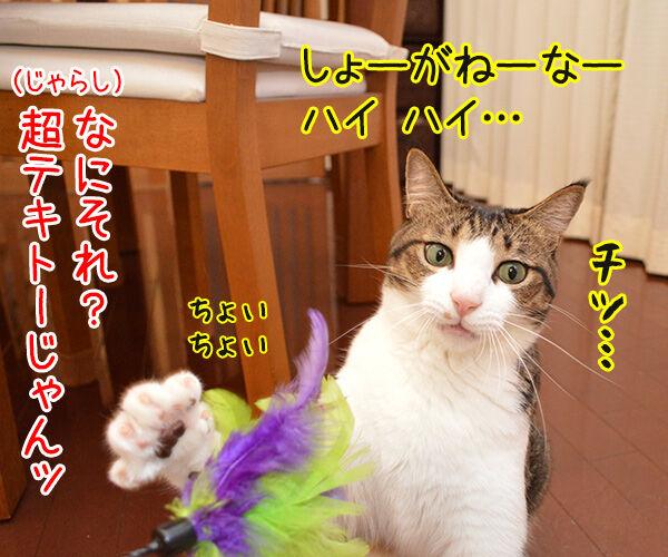 じゃらし的な彼女 猫の写真で4コマ漫画 2コマ目ッ