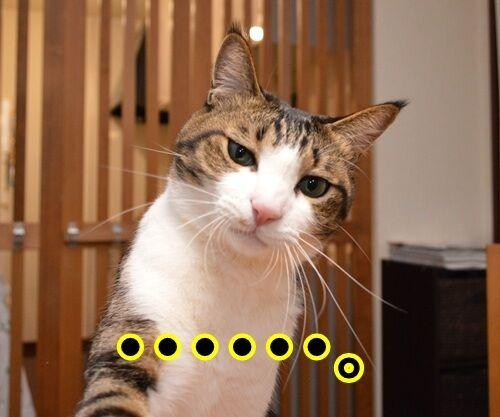 ためいきの理由 猫の写真で4コマ漫画 3コマ目ッ