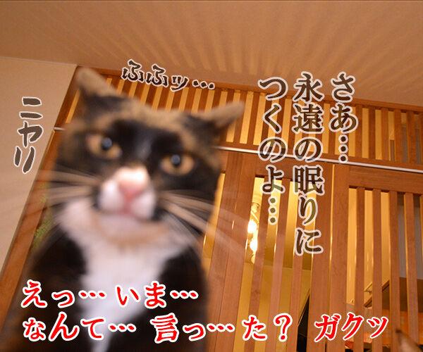 Dr.だいず 猫の写真で4コマ漫画 4コマ目ッ