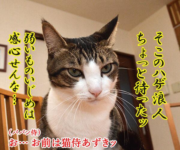 猫侍 其の三 猫の写真で4コマ漫画 3コマ目ッ