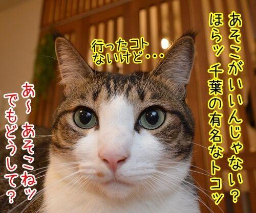 夏休みだから 猫の写真で4コマ漫画 3コマ目ッ