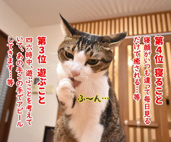 猫飼いさんが思う猫の毎日の生きがいランキングなのよッ 猫の写真で4コマ漫画 2コマ目ッ