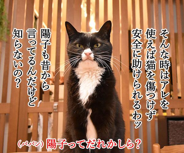 パニック状態のにゃんこにはアレを使うのよッ 猫の写真で4コマ漫画 3コマ目ッ