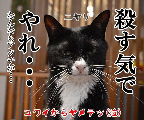 パパン、〇〇気でやりますッ 猫の写真で4コマ漫画 4コマ目ッ