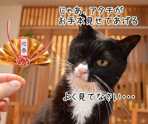 元旦だから新年のご挨拶 猫の写真で4コマ漫画 3コマ目ッ