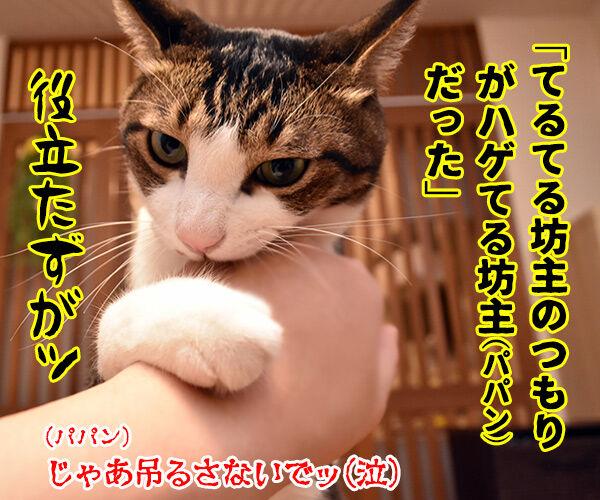 猫の写真で4コマ漫画 3コマ目ッ